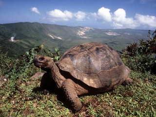 ガラパゴス諸島の画像 p1_1