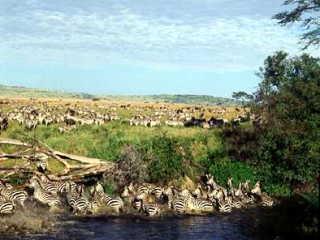セレンゲティ国立公園の画像 p1_8